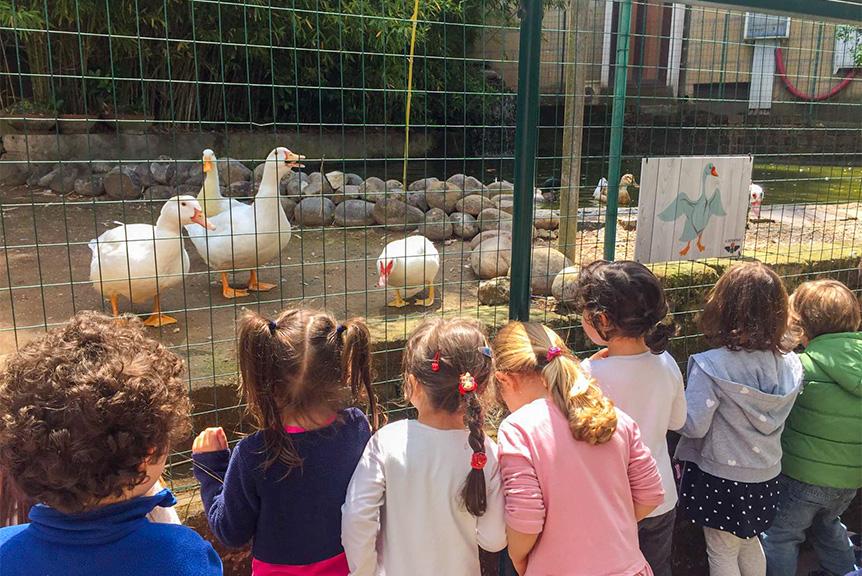 Laghetto Papere scuola materna seraphicum roma eur